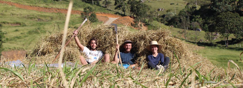 volunteer-permaculture-Brazil