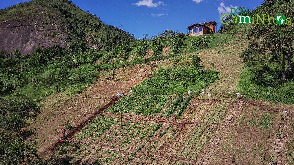 agrofloresta em Brasil