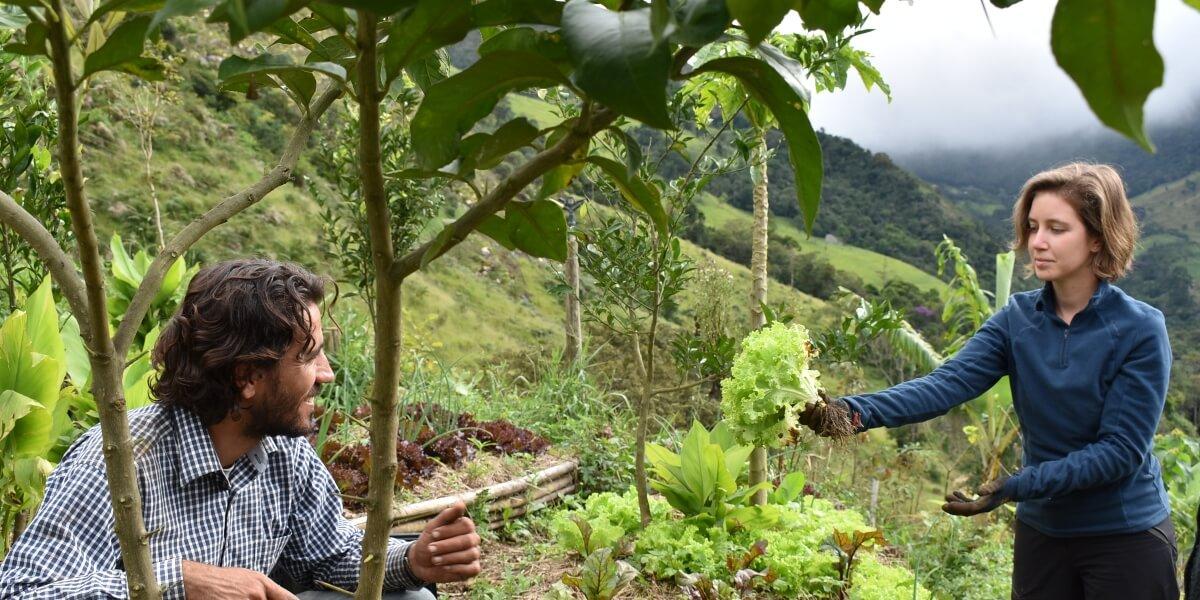 agroforestry-organic-farming