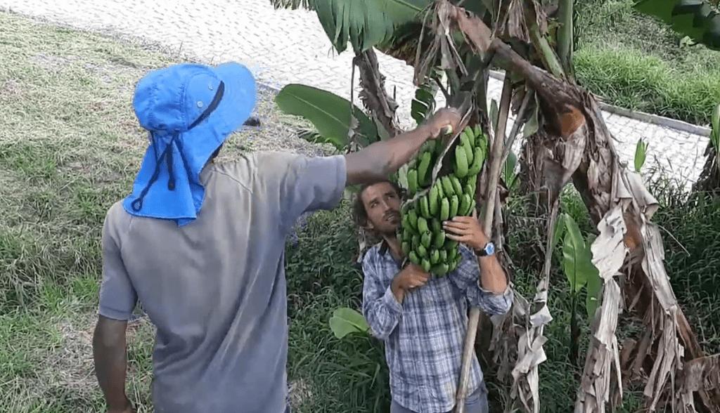 Jovem Aprendiz aprendizagem cortando bananeira